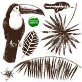 Insieme tropicale disegnato a mano Immagine Stock