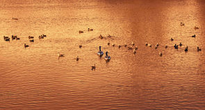 Insieme Uccelli sul lago Fotografie Stock Libere da Diritti