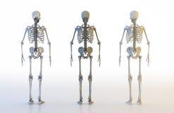 Insieme umano dello scheletro illustrazione 3D illustrazione vettoriale