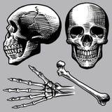 Insieme umano disegnato a mano del cranio illustrazione vettoriale