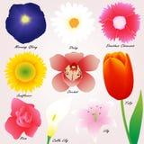 Insieme variopinto di vettore dei fiori Fotografia Stock