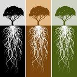 Insieme verticale della bandiera della radice dell'albero Fotografie Stock Libere da Diritti