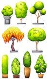 Insiemi delle piante decorative Fotografia Stock Libera da Diritti