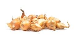 Insiemi di cipolla su bianco Immagini Stock