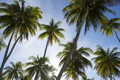 Insiemi di Sun attraverso il boschetto degli alberi del cocco Fotografie Stock