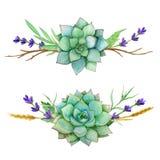 Insiemi orizzontali dell'acquerello dei succulenti, delle foglie e di vecchi rami Per gli inviti, cartoline d'auguri, coperture,  royalty illustrazione gratis