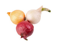Insiemi rossi, del yelow isolati e di bianco di cipolla pronti per piantare Immagine Stock Libera da Diritti