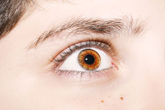 An insightful look on brown colored eyes Royalty Free Stock Image