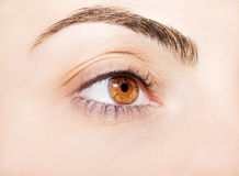An insightful look on a brown eye.  Royalty Free Stock Photo