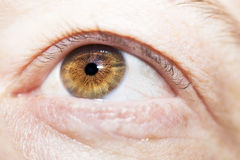 Insightful look eyes Stock Photography