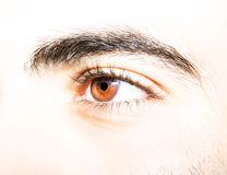 Insightful look eyes. An insightful look on brown colored eyes Stock Photography