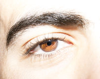 Insightful look eyes. An insightful look on brown colored eyes Royalty Free Stock Image