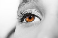 Insightful look eyes royalty free stock images