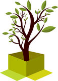 Insignia del árbol del rectángulo Fotografía de archivo libre de regalías
