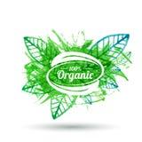 Insignia orgánica del producto en textura verde de la hoja Vector i de la acuarela Imágenes de archivo libres de regalías