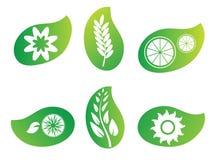 Insignias verdes de la hoja de la naturaleza Imágenes de archivo libres de regalías
