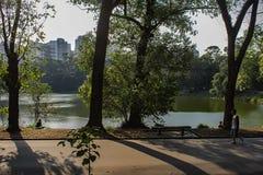Inskolning parkerar sãopaulo Brasilien skuggor och träd fotografering för bildbyråer