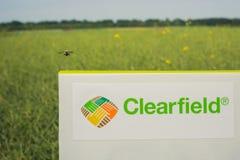 Inskrift på det Clearfield tecknet, mot bakgrunden av canolafältet Krypet är flyin royaltyfria foton