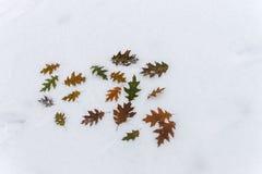 Inskriftvinterlönnlöven i snön Arkivfoto