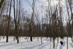 Insnöad skog royaltyfria bilder