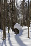 Insnöad vinterskog arkivbild