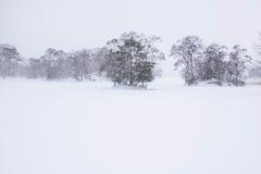 Insnöade Onuma parkerar, snöar bakgrund Royaltyfri Foto