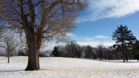 Insnöat en golfbana Royaltyfri Bild
