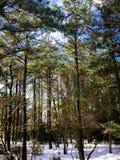 Insnöat Forresten Arkivfoto