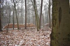 Insnöat skogen arkivfoto