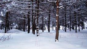 Insnöat skogen av Europa royaltyfri foto