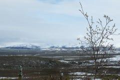 Insnöade Alaska& x27; nationalpark för s Denali Arkivfoto