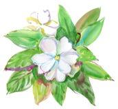 Biali kwiaty. akwarela Zdjęcie Stock