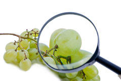 Inspeção das uvas Imagens de Stock Royalty Free