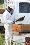 Inspección de Honey Bee Plate Foto de archivo libre de regalías