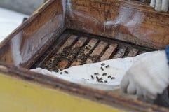 Inspección de la colmena en invierno Fotos de archivo libres de regalías