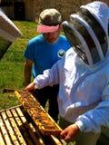 Inspección de una colmena de la abeja de Langstroth Imagenes de archivo