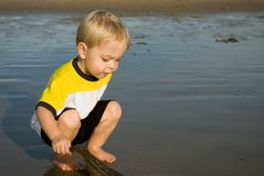Inspecionando a alga fotografia de stock royalty free