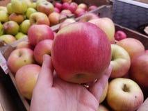 Inspecionando uma maçã no mercado fotografia de stock