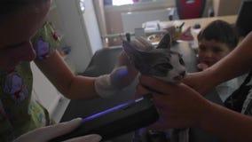 Inspectie van de kat met een ultraviolette lamp in de veterinaire kliniek stock video