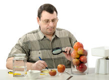 Inspecting the appearance of apples Stock Photography