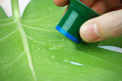 Inspecting rain drops on a leaf. Inspecting rain drops on a tropical leaf with lotus effect Royalty Free Stock Photo