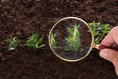 Inspecting sapling with magnifying glass Stock Image