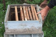 Inspection d'une vieille ruche d'abeille Photo stock