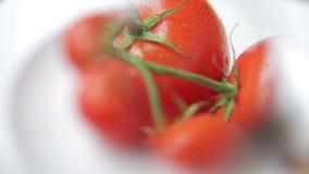 Inspection de la branche humide des tomates avec l'agrandissement clips vidéos