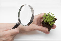 Inspection of young plants through a magnifying glass. Inspection of young plants in the peat pot through a magnifying glass royalty free stock image