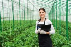 Inspector de sexo femenino del invernadero que comprueba las plantas Fotografía de archivo libre de regalías