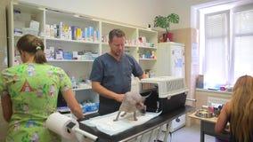 Inspekcja zwierzę w weterynaryjnej klinice Kot Sphynx traken przychodził z klatki dla transportu Pielęgniarka, zbiory wideo