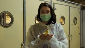 Inspetor com o patinho pequeno nas mãos contra a incubadora na exploração avícola vídeos de arquivo