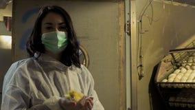 Inspetor na máscara protetora e macacões com o patinho na incubadora na exploração agrícola video estoque