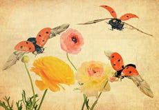 Inspiración de la fauna Imágenes de archivo libres de regalías